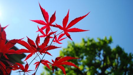 red, blue, leaves