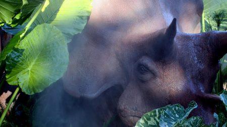 rhinoceros, wild nature, eye