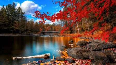 river, autumn, leaves