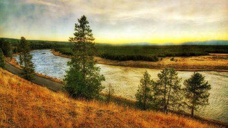 river, coast, pines
