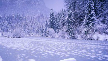 river, ice, fir-trees
