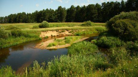 river, meadow, wood