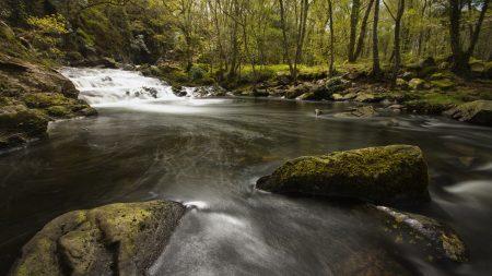 river, stones, moss
