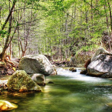 river, stones, wood