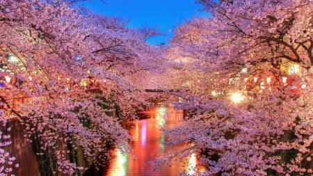 river, trees, cherry