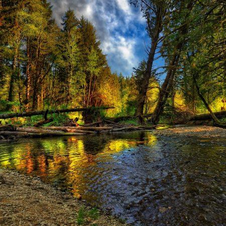 river, trees, logs