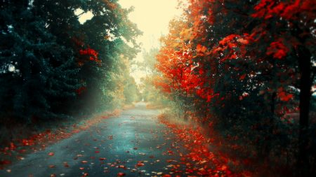 road, autumn, leaves