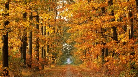 road, autumn, trees