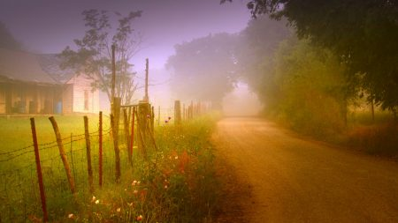 road, country, fog