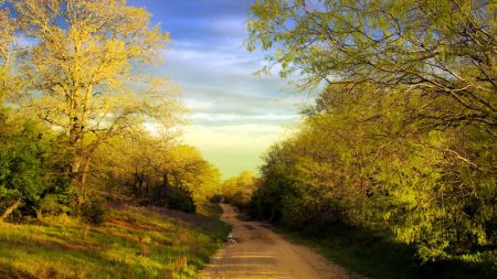 road, country, trees