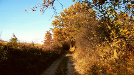 road, dirt, bushes
