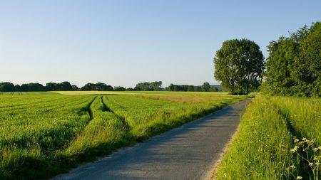 road, field, greens