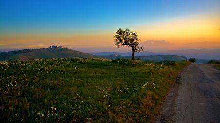 road, field, plain