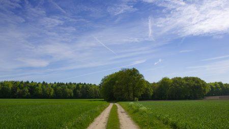 road, field, trees