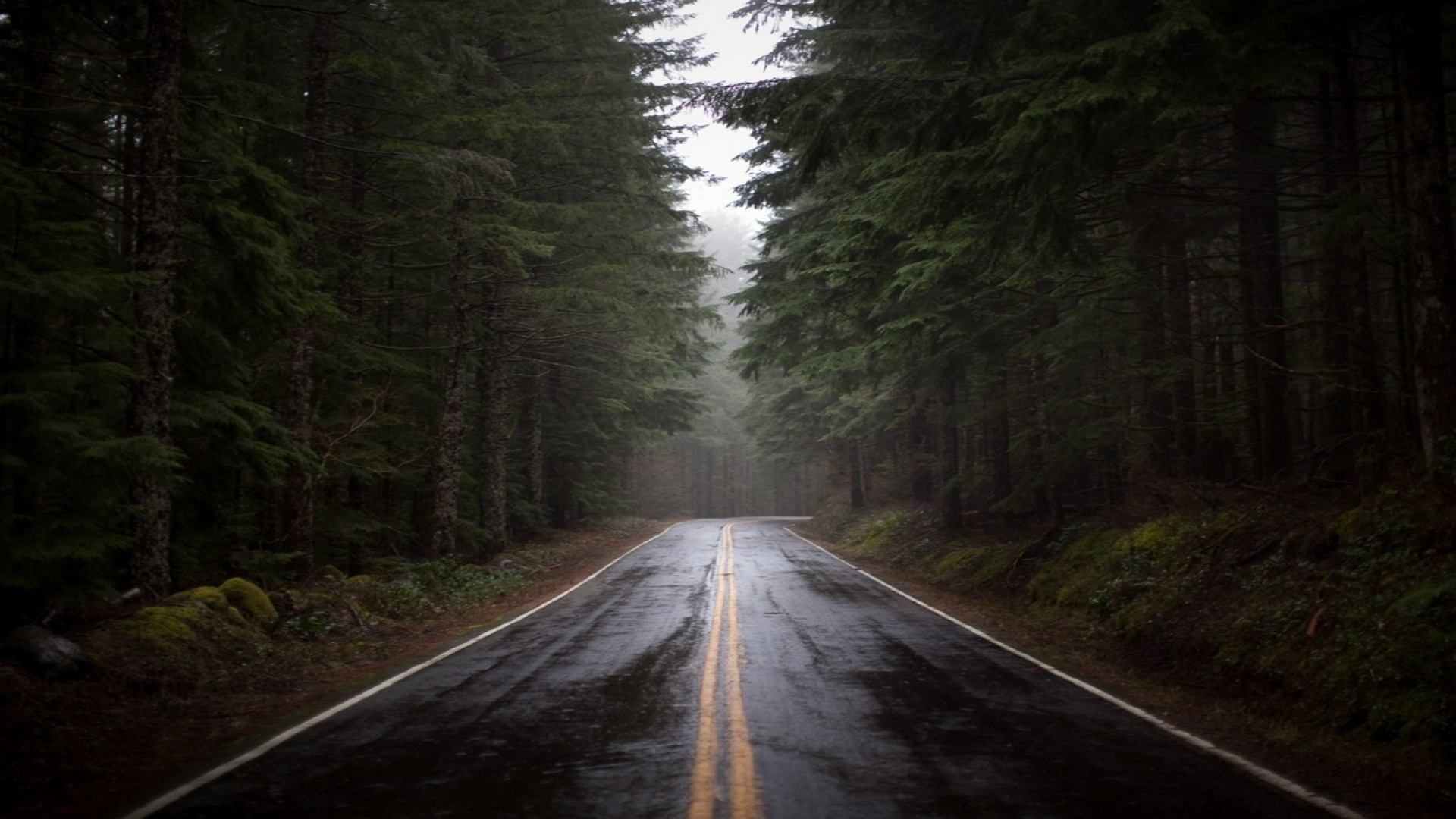 Earnings Disclaimer >> Download Wallpaper 1920x1080 road, fog, nature, trees Full HD 1080p HD Background