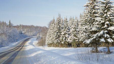 road, fur-trees, winter