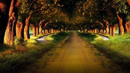 road, garden, avenue