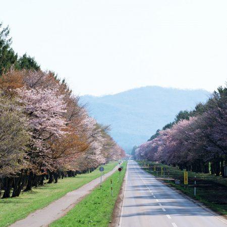 road, gardens, japan