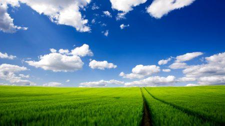 road, greens, grass