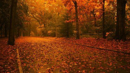 road, leaves, asphalt