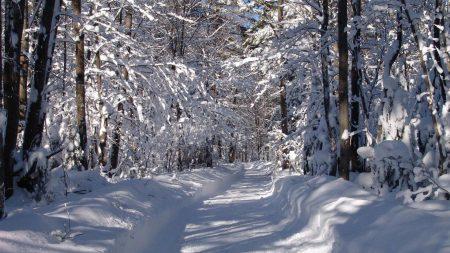 road, snow, snowdrifts