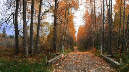 road, soil, trees
