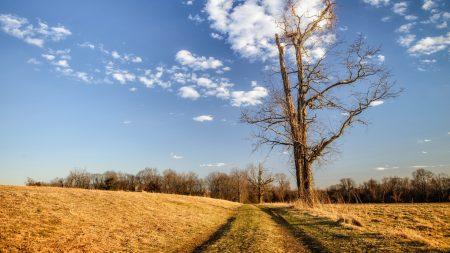 road, tree, landscape