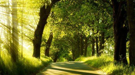 road, trees, sunlight