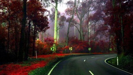 road, turn, trees
