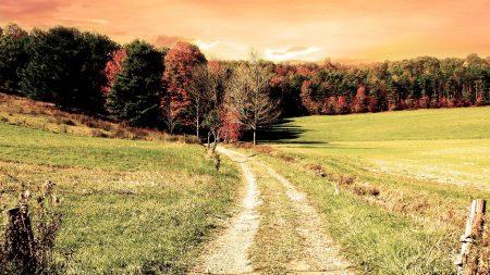 road, wood, field