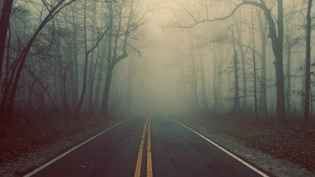 road, wood, fog