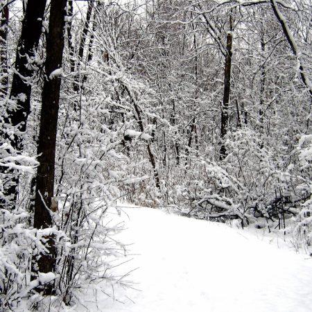 road, wood, snow