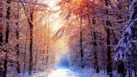 road, wood, trees