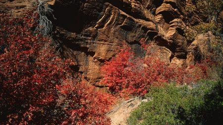 rocks, stones, autumn