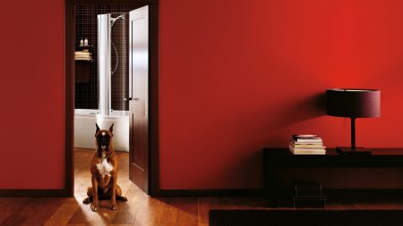 room, interior, dog