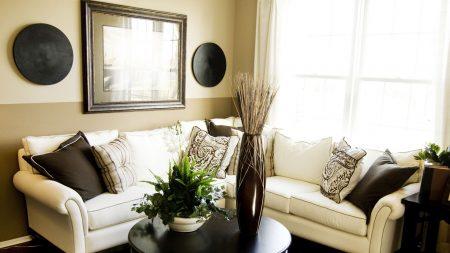 room, plant, vase