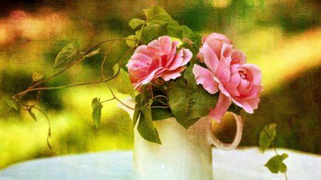 rose, bindweed, pitcher