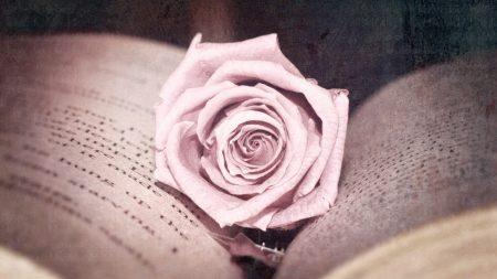 rose, bud, book