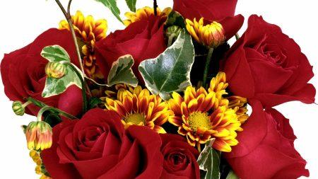 rose, chrysanthemum, flower