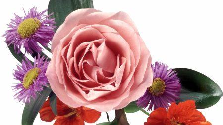 rose, chrysanthemum, nasturtium