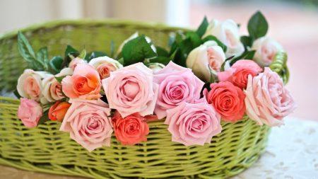 rose, flower, basket