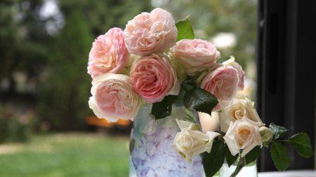rose, flower, garden