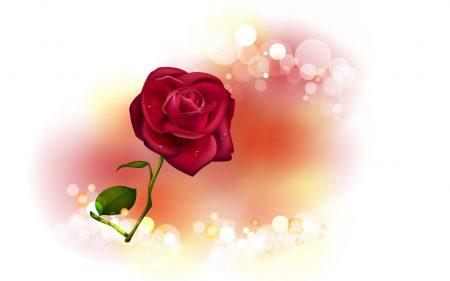 rose, flower, glare