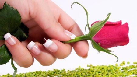 rose, flower, hand