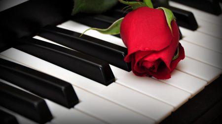 rose, flower, keys