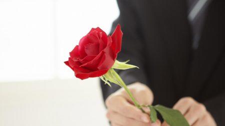 rose, flower, man