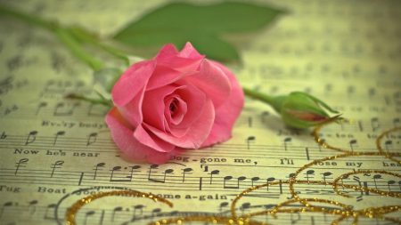 rose, flower, music