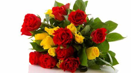 rose, flower, red