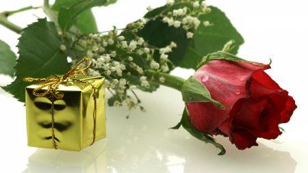 rose, flower, stem