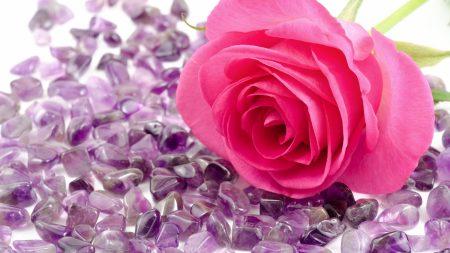 rose, flower, stone